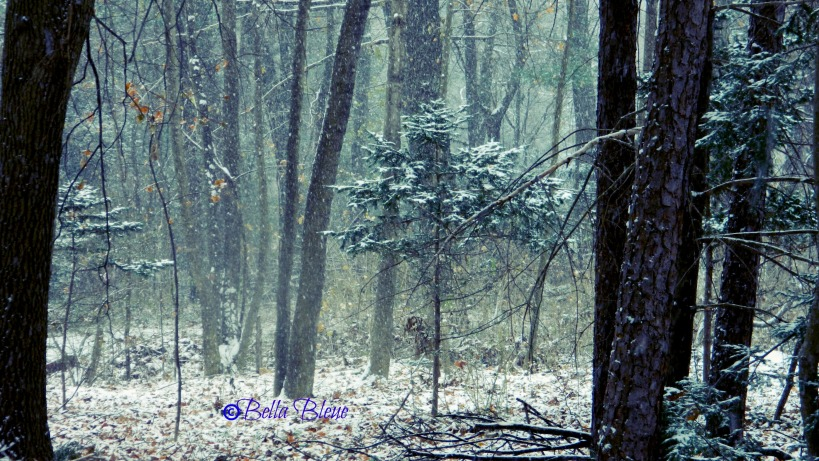 Winter Woods 1