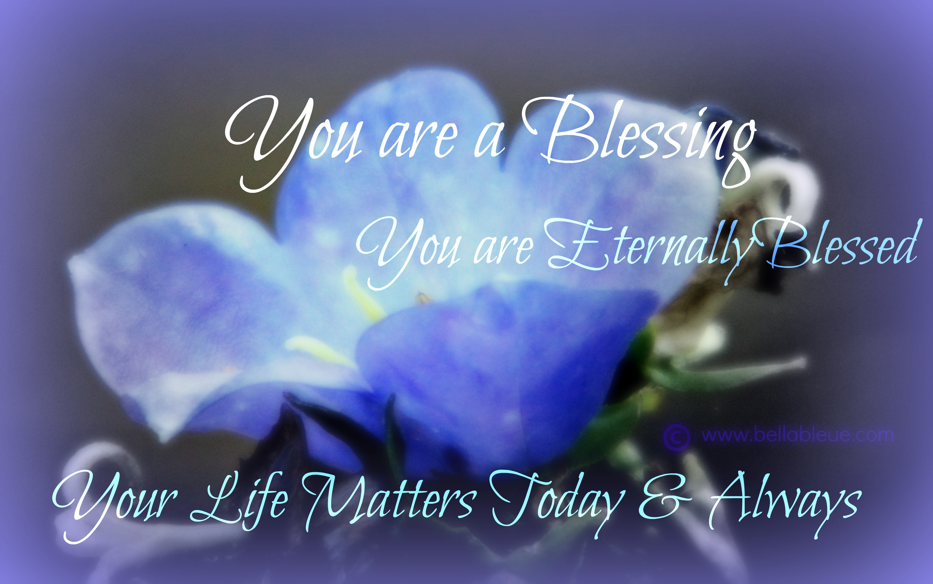 You Are A Blessing Quotes Custom You Are A Blessing Quotes  Bella Bleue Healing™